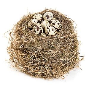 Putpelių kiaušiniai ir cholesterolis: kiekis ir poveikis padidėjimui - Gydymas November